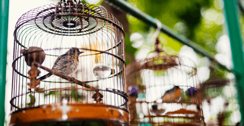 The Bird Cage Quotes